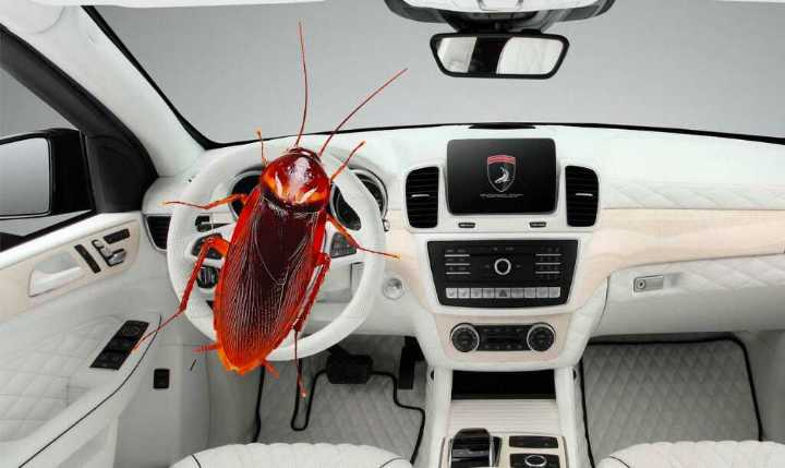 how to remove roaches from car