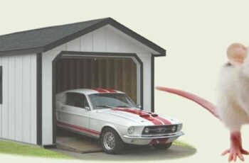 how to keep mice out of garage and car